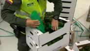 Anderhalve ton cocaïne tussen avocado's voor haven van Antwerpen
