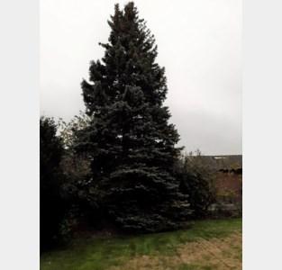 Keerbergen vindt kerstboom langs de Putsebaan