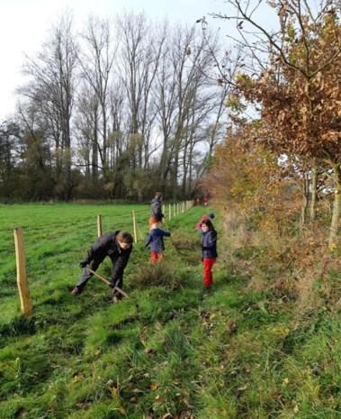 Natuurpunt plant 300 boompjes in Honegem