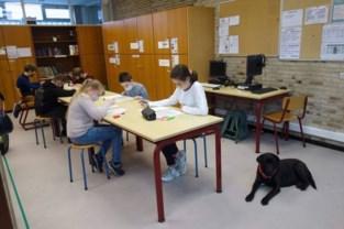 """Zwarte labrador Zora haalt stress weg bij leerlingen met autisme: """"Een hond accepteert hen zoals ze zijn, zonder oordeel"""""""
