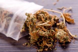 Politie vindt meer dan 2 kilo marihuana in luchtledig verpakte zakken onder motorkap