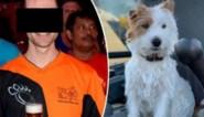 """Jogger die hondje Dribbel doodstak verdedigt zich, baasje reageert: """"Onwaar en totaal misplaatst"""""""