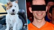 Haatreacties, doodsbedreigingen en politiebescherming: waarom hondje Dribbel zoveel hevige emoties losmaakt