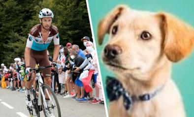 """Franse renner komt zwaar ten val door """"schattig klein hondje"""", reactie van baasje kan op minder begrip rekenen"""