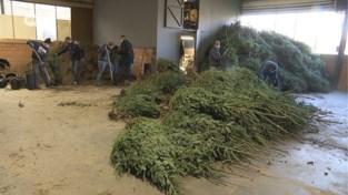 """Veel vraag naar kerstbomen: """"Wat vrolijkt nu meer op dan een Kerstboom?"""""""