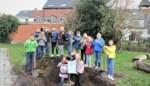 Natuurpunt schenkt gemeente twee toekomstbomen