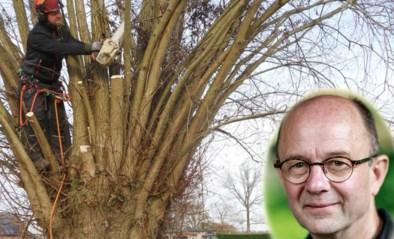 Koester de knotboom: de sterkhouders van onze landschappen en een grote waarde voor de natuur