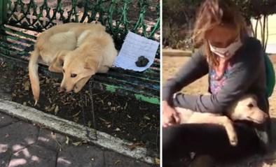 """Hond vastgebonden aan bank met hartverscheurende boodschap: """"Mijn ouders mishandelen hem"""""""