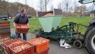 170.000 tulpenbollen geplant in één dag