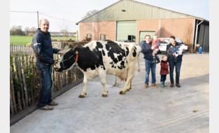Peerse koe levert recordhoeveelheid van 145.000 liter melk