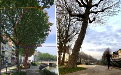 Te scheef of niet? Ruzie over boom op de Coupure woedt tot op bureau van Vlaamse minister
