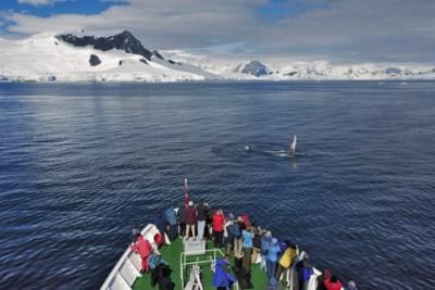 Onverwacht voordeel van corona: walvissen kunnen eindelijk herademen