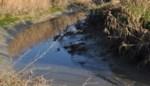 Provincie trekt half miljoen uit voor vzw Durme en Natuurpunt