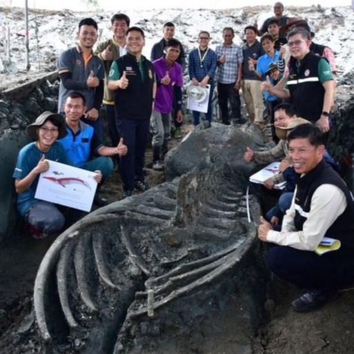 """Een zeldzame vondst"": duizenden jaren oud walvisskelet gevonden in Thailand"