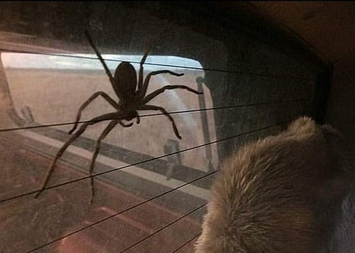 """Een jaar geleden liet Jake een spin in zijn huis leven. Nu woont hij samen met een monster: """"Kerel, jouw huis is nu eigendom van die spin"""""""