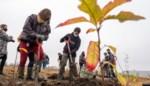 Vastgoedgroep Goodman plant 6.000 bomen