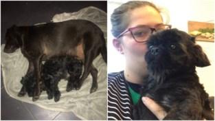 Door corona is Felicity haar dansschool dicht, net nu wachten dure operaties voor haar honden Snoepy en Aiko