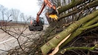 """Vlaamse overheid snoeit groen langs E19: """"Het kan drastisch lijken"""""""