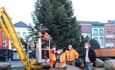 Kaukasische kerstboom van twaalf meter siert Grote Markt