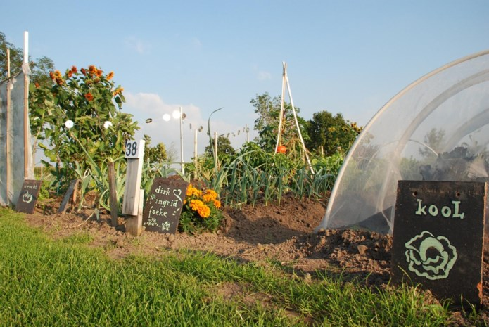 Tuinhier Deinze stelt tuintjes ter beschikking in Volkstuinpark langs Gaversesteenweg