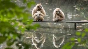 """""""De papegaaien en aapjes missen de interactie met de bezoekers enorm"""": achter de schermen bij 'dierenpark voor fijnproevers'"""