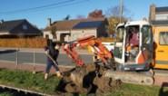 Linterpoortenlaan krijgt in december 41 nieuwe bomen