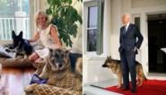 Biden verstuikt voet tijdens spelen met hond, Trump wenst hem beterschap
