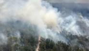 Australische werelderfgoed Fraser Island deels verwoest door bosbranden