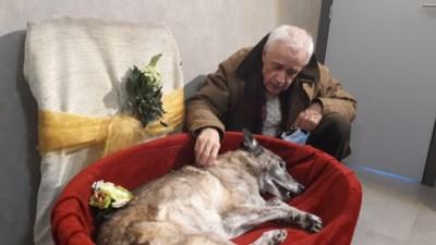 Yves en Lucie ontroostbaar nadat urne met as van hun trouwe viervoeter Fée gestolen werd