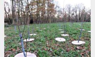 Ouders planten 270 bomen in geboortebos