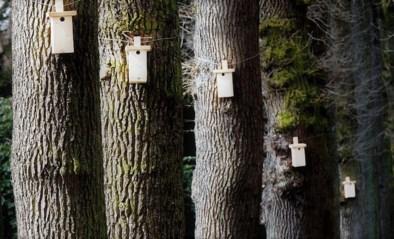 Nestkastjes voor mezen ingezet in oorlog tegen schadelijke rupsen