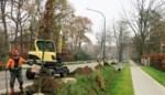 Werken langs N121 na twee jaar voltooid: Aanplanting 81 eiken kroon op het werk