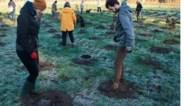 Helden van de coronacrisis krijgen 18.000 bomen in nieuw bos in Houthalen-Helchteren
