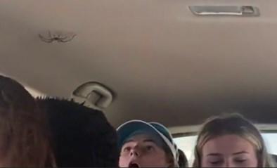 """Meisjes ontdekken plots gigantische spin in de auto: """"Steek mijn wagen in de fik!"""""""
