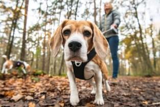 """Nultolerantie voor wie hond niet aan de lijn houdt: """"Tijd van waarschuwen is voorbij"""""""