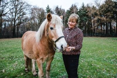 23-jarig therapiepaard met artrose zoekt vijfsterrenrusthuis