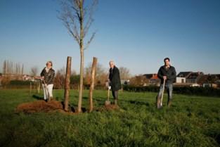 Nieuw Zuunpark is eerste stap naar groter netwerk van meer groene ruimten