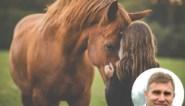 """""""Een paard mag geen impulsaankoop zijn"""", en daarom brengt de Sint zelden een paard als cadeau"""