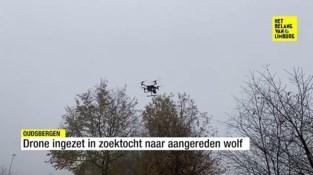Bestelwagen gevonden die wolf als eerste raakte: DNA moet duidelijk maken welk dier is geraakt