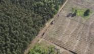 "Greenpeace: ""Europese bossen zouden dubbel zoveel CO2 kunnen absorberen"""