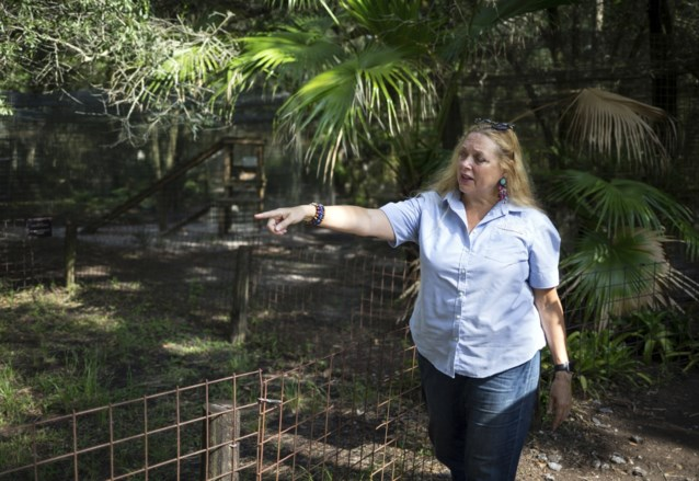 Tijger verminkt medewerker in dierenpark van Tiger King-ster Carole Baskin