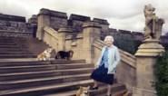 Britse Queen in rouw: opnieuw een van haar honden overleden