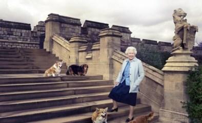 De Queen in rouw: opnieuw een hondje gestorven