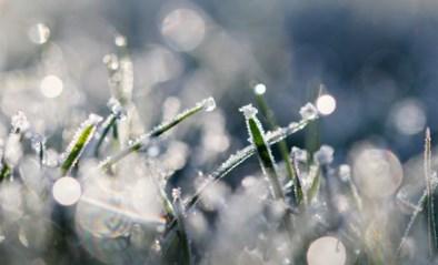 Nog even wachten op de winterprik, wel 15 centimeter sneeuw in Hoge Venen