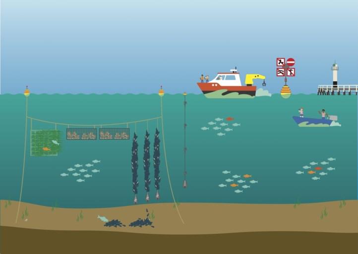 Colruyt krijgt vergunningen voor zeeboerderij