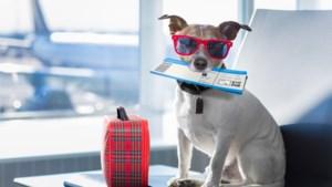 Britse honden alleen nog per vliegtuig naar Zwitserland door Brexit