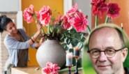 Snijbloemen als kerstcadeau: deze soorten geef je het best, en zo verleng je hun levensduur