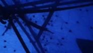 """Man schrikt zich rot wanneer hij wakker wordt in een tent bedekt met 'spinnen': """"Deed het bijna in mijn broek"""""""