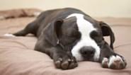 """Dierenvoeding uit rekken gehaald door te hoog gehalte vitamine D: """"Stop onmiddellijk met je huisdier dit product te geven"""""""