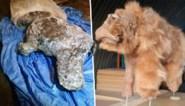 Wetenschappers ontdekken verrassend goed bewaarde wolharige neushoorn onder de permafrost